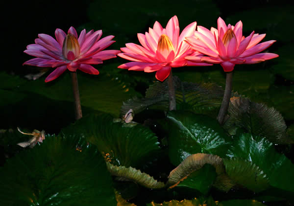 http://www.photographyblog.com/images/photo_of_the_week/16220505/Water%20Lily%20Shadows.jpg